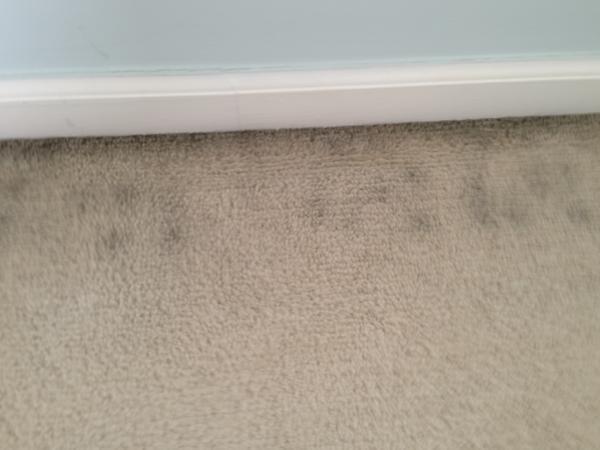 black mold in carpet